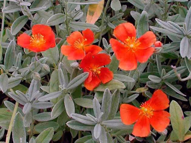 Цветы для клумбы: однолетние и многолетние растения