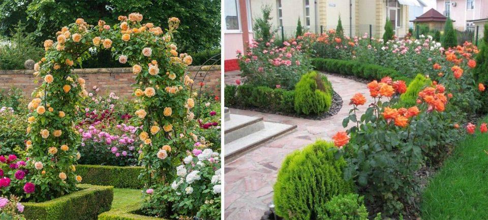 Интересные способы применения роз в ландшафтном дизайне