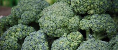 Обзор капусты брокколи и секреты её выращивания