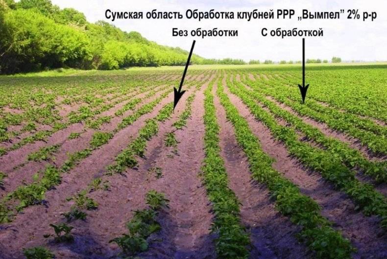 Особенности использования регулятора роста растений «вымпел»