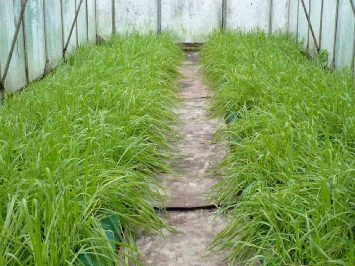 В чем состоит польза и вред посева ржи на огороде?