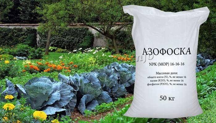 Как работает удобрение Азофоска и правила его применения
