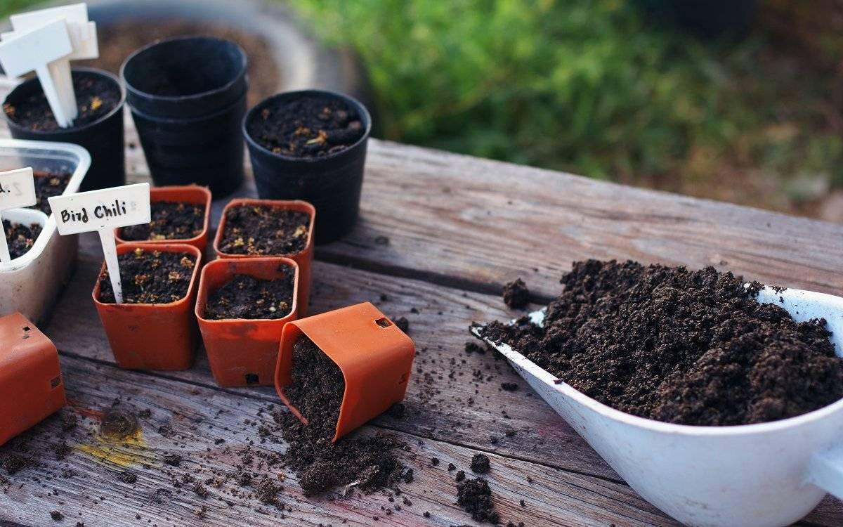 Соотношение земли и песка для рассады. подготовка земли для рассады. приготовление грунта для рассады
