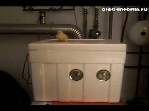 Делаем инкубатор для куриных яиц в домашних условиях самостоятельно