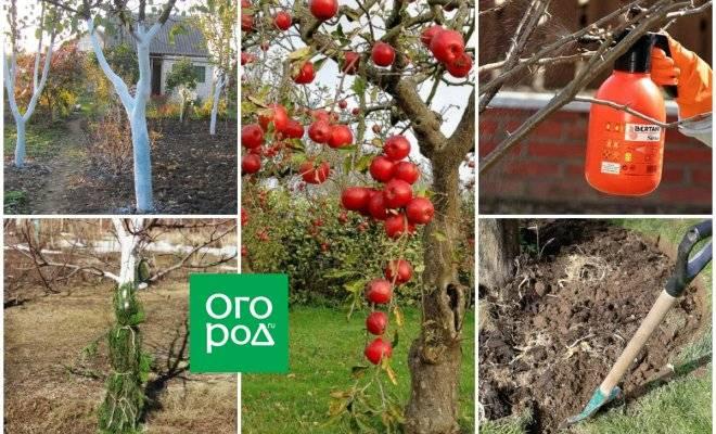Готовим сад огород к зиме — осенняя работа в своем саду