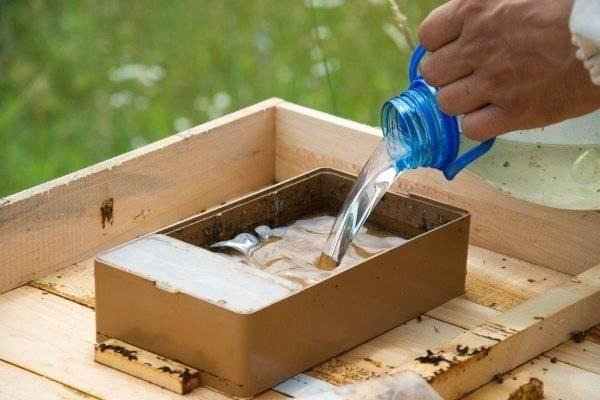 Виды поилок для пчёл. как сделать поилку своими руками