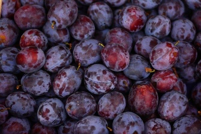 Слива – целебные свойства 7 витаминов