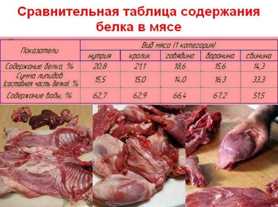 Что мы знаем о пользе и вреде для здоровья человека мяса нутрии?