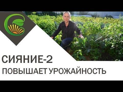 Виды и способы применения удобрения «сияние»