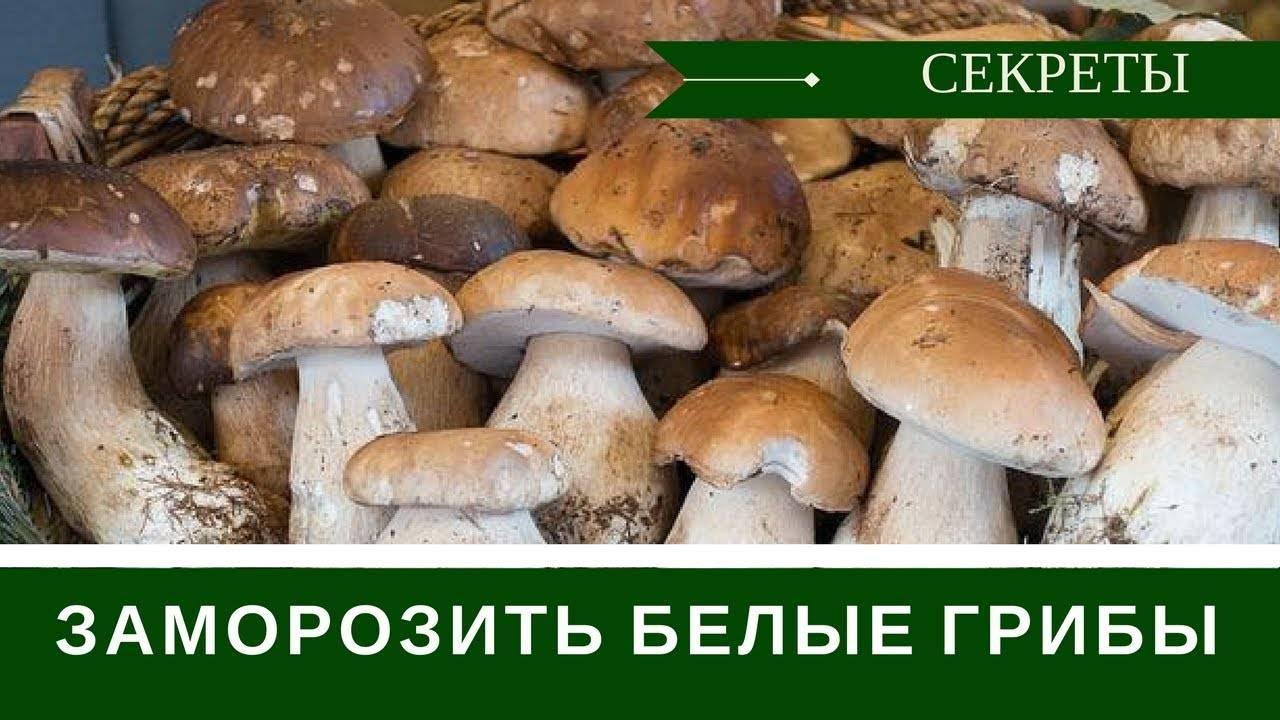 Выращивание белых грибов: особенности выращивания в промышленных масштабах и в домашнем хозяйстве (75 фото)