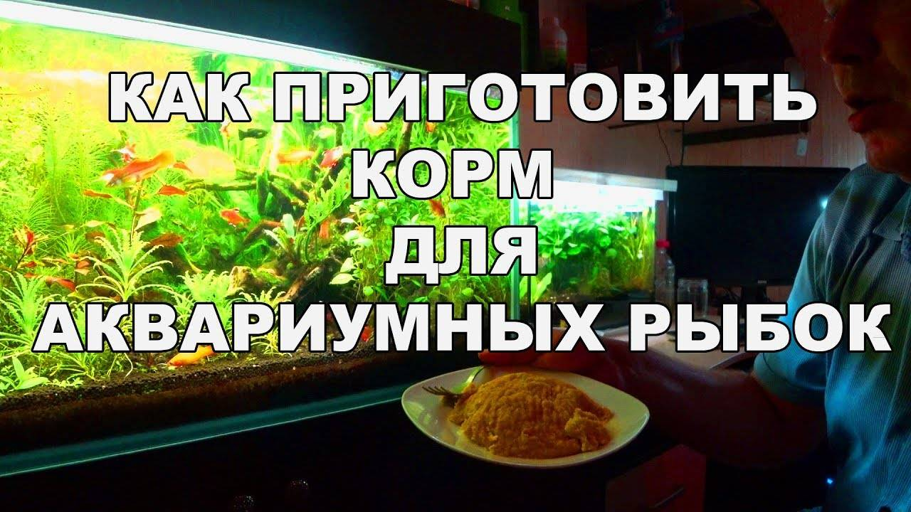 Готовим самостоятельно зеленый корм для аквариумной рыбы