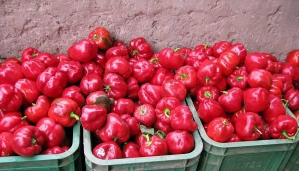 Какие лучшие сорта перцев для сибири и урала?