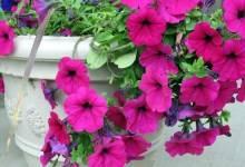"""Подкормка """"янтарин, врк"""": помогаем вырасти садовым и комнатным растениям"""