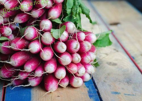 Самые лучшие сорта семян редиски для посадки в открытый грунт