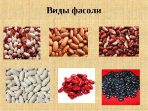 Что мы не знаем о фасоли? польза и как приготовить фасоль