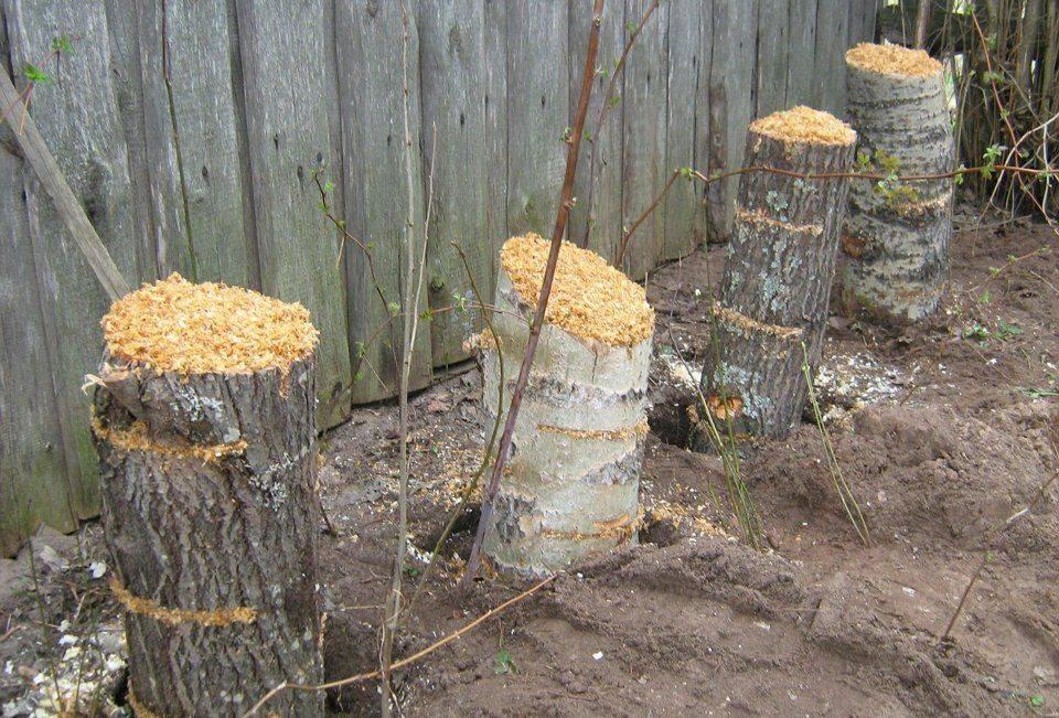 Как вырастить вешенки с нуля в домашних условиях: с чего начать и какая технология выращивания грибов в квартире?