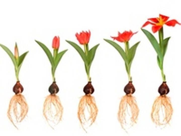 Обзор стимуляторов и регуляторов роста растений