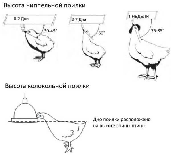 Как сконструировать поилку для курочек?
