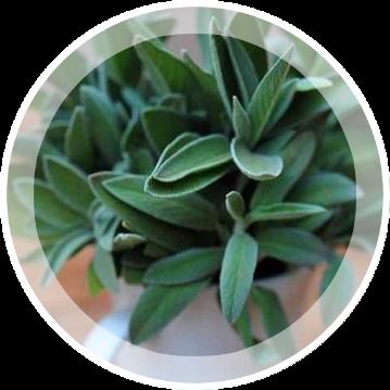 10 лекарственных растений, которые легко вырастить на подоконнике зимой