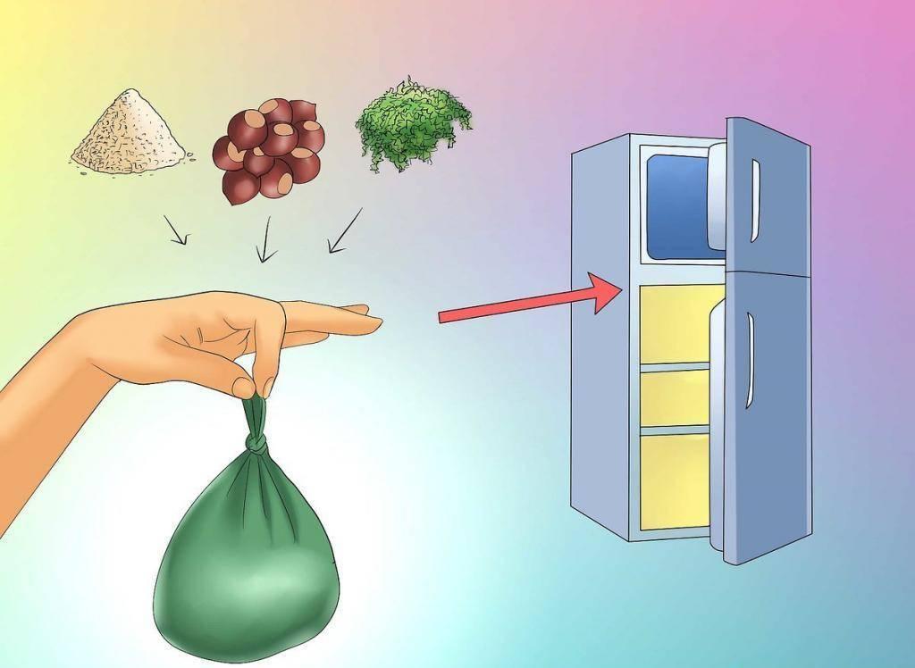 Как выращивать каштан? как правильно прорастить каштан дома из ореха? где посадить каштан на участке