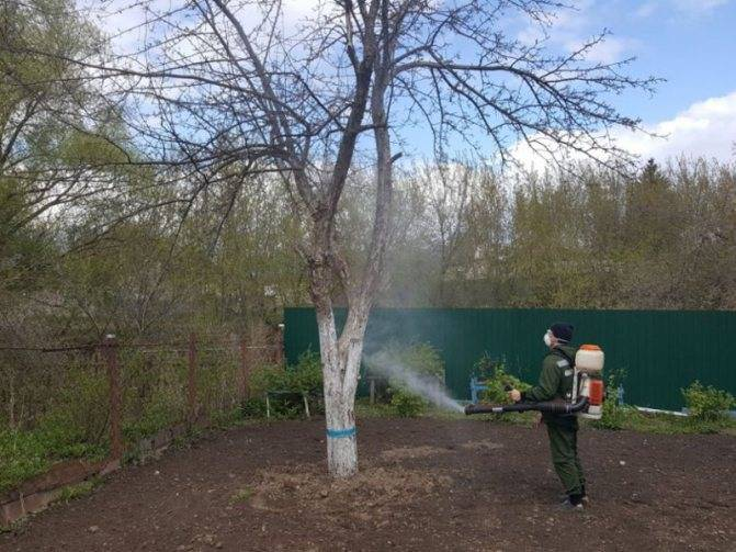 Медный купорос: применение в садоводстве