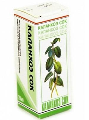 Каланхоэ: полезные и лекарственные свойства, противопоказания