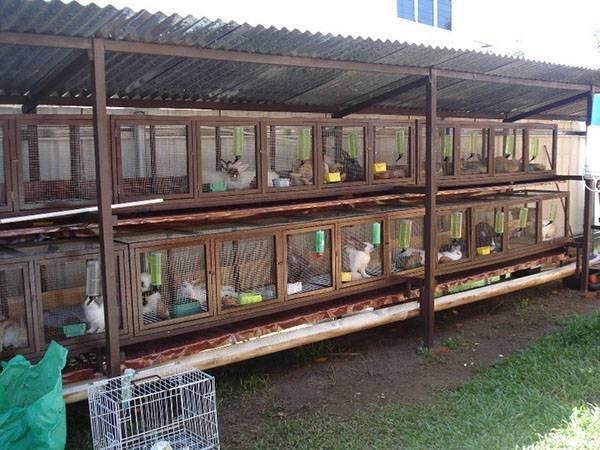 Разведение кроликов в домашних условиях на приусадебном участке