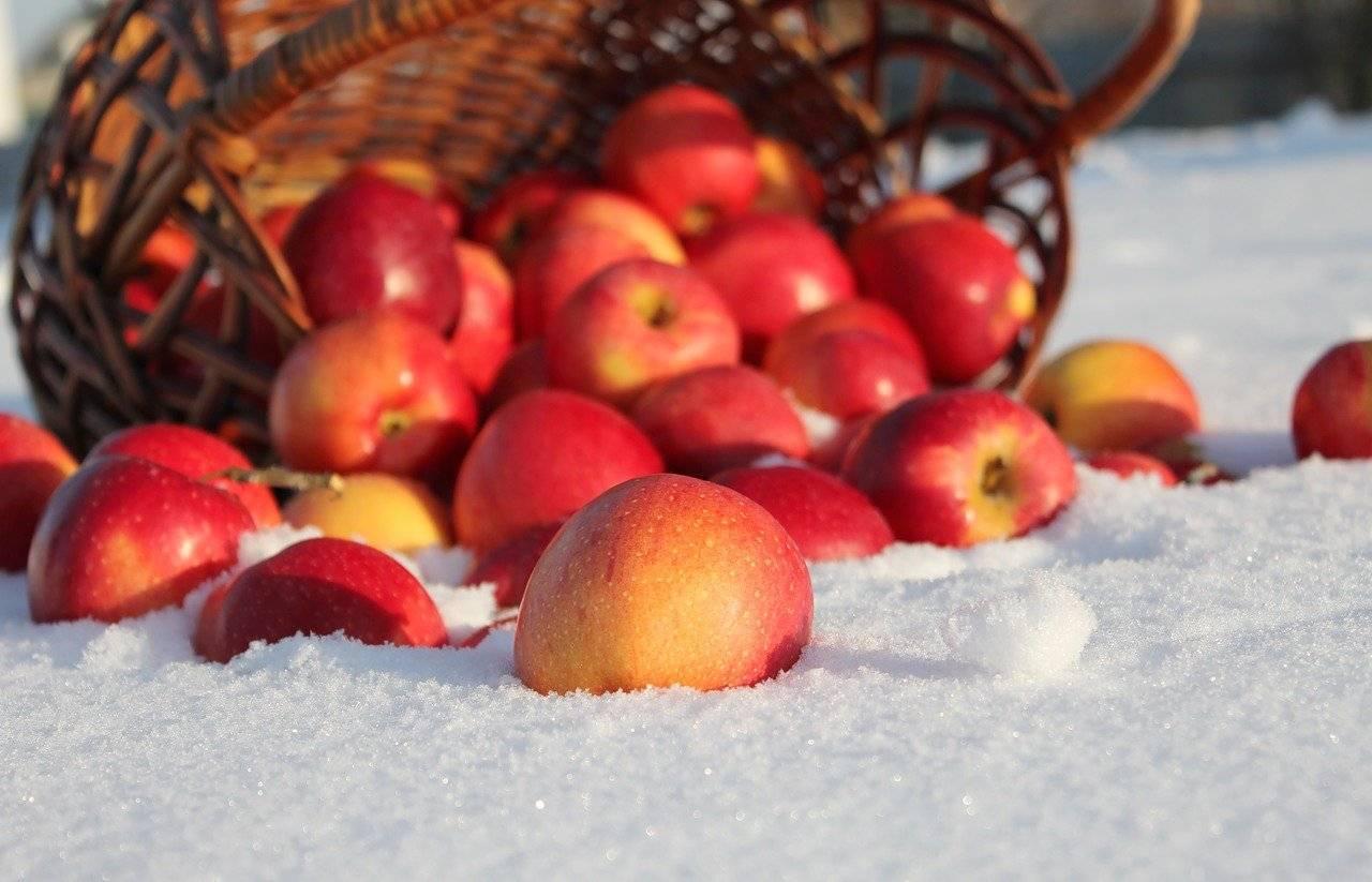 Лучшие сорта яблонь для урала и сибири: 3 лучших летних сорта и правила ухода