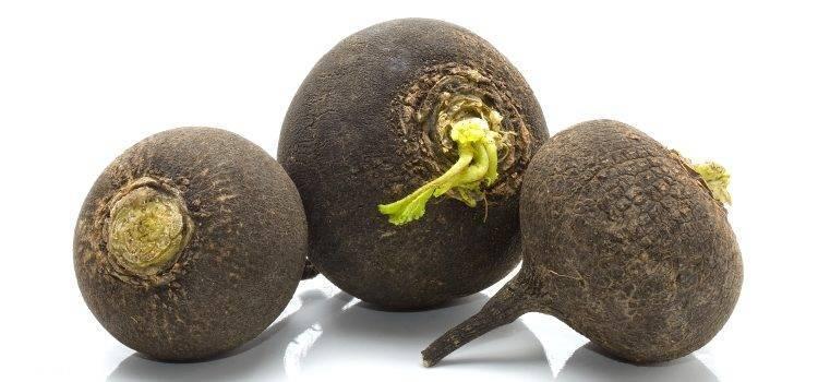 Польза и вред черной редьки для здоровья организма
