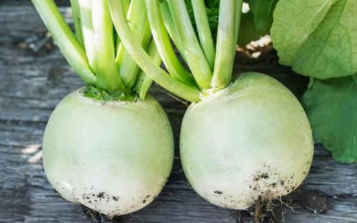 Редька маргеланская: как ее выращивать