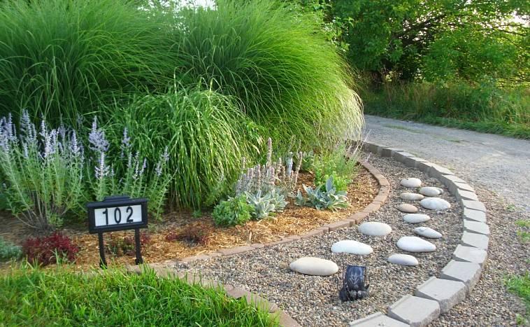 Декоративные злаки для сада -декоративные травы для сада
