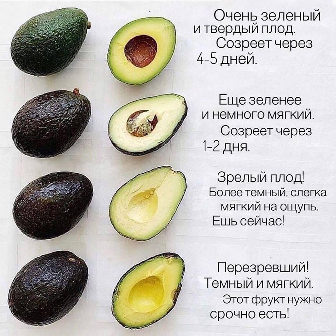 Что за фрукт — авокадо и как его едят