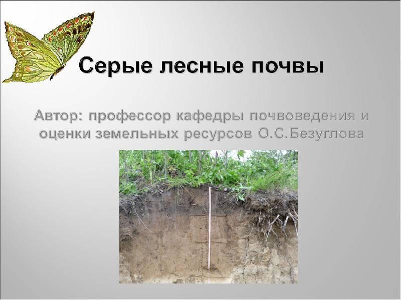 Образование и классификация серых лесных почв