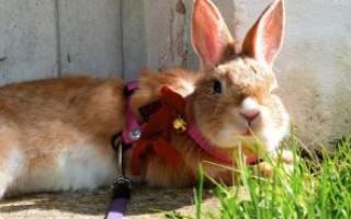 Можно ли давать кроликам - читайте подробную статью
