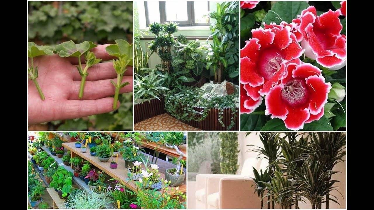 Как размножить красивый лекарственный цветок алоэ в домашних условиях и как потом ухаживать за растением?