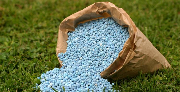 Какие вносить удобрения под картофель при посадке в лунку весной
