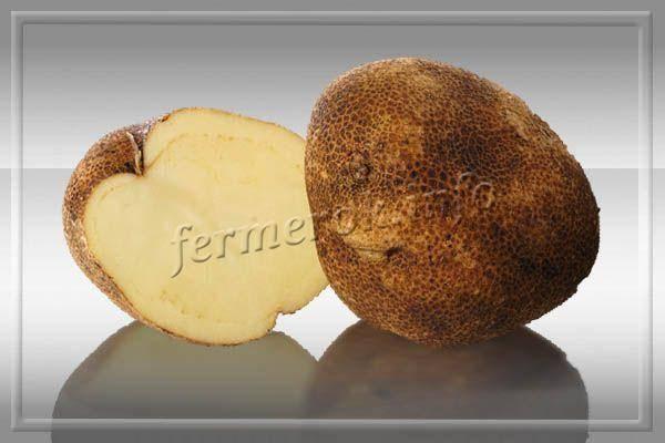 Описание сорта картошки киви