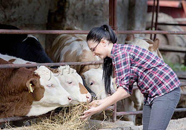 Откорм бычков на мясо в домашних условиях: советы и таблица
