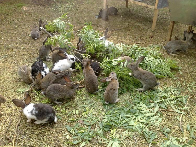 Ямное содержание кроликов
