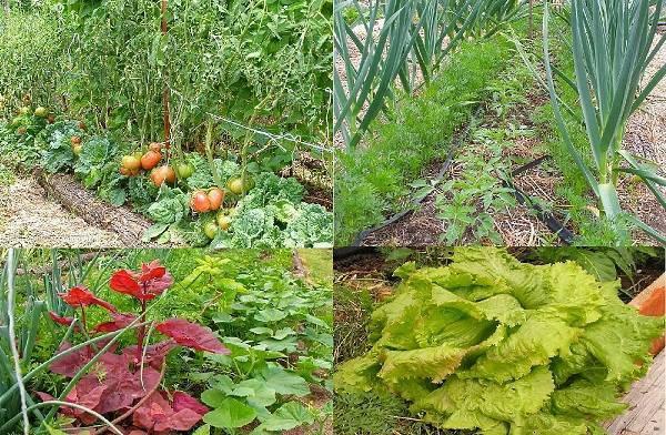 Теплые грядки по курдюмову: секреты плодородия при органическом земледелии