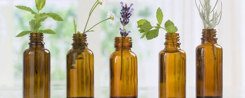 Эфирное масло сандалового дерева: свойства и применение, отзывы