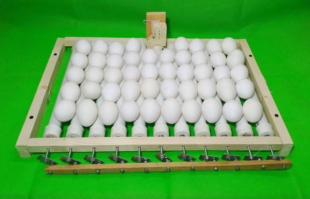 Делаем инкубатор для яиц своими руками