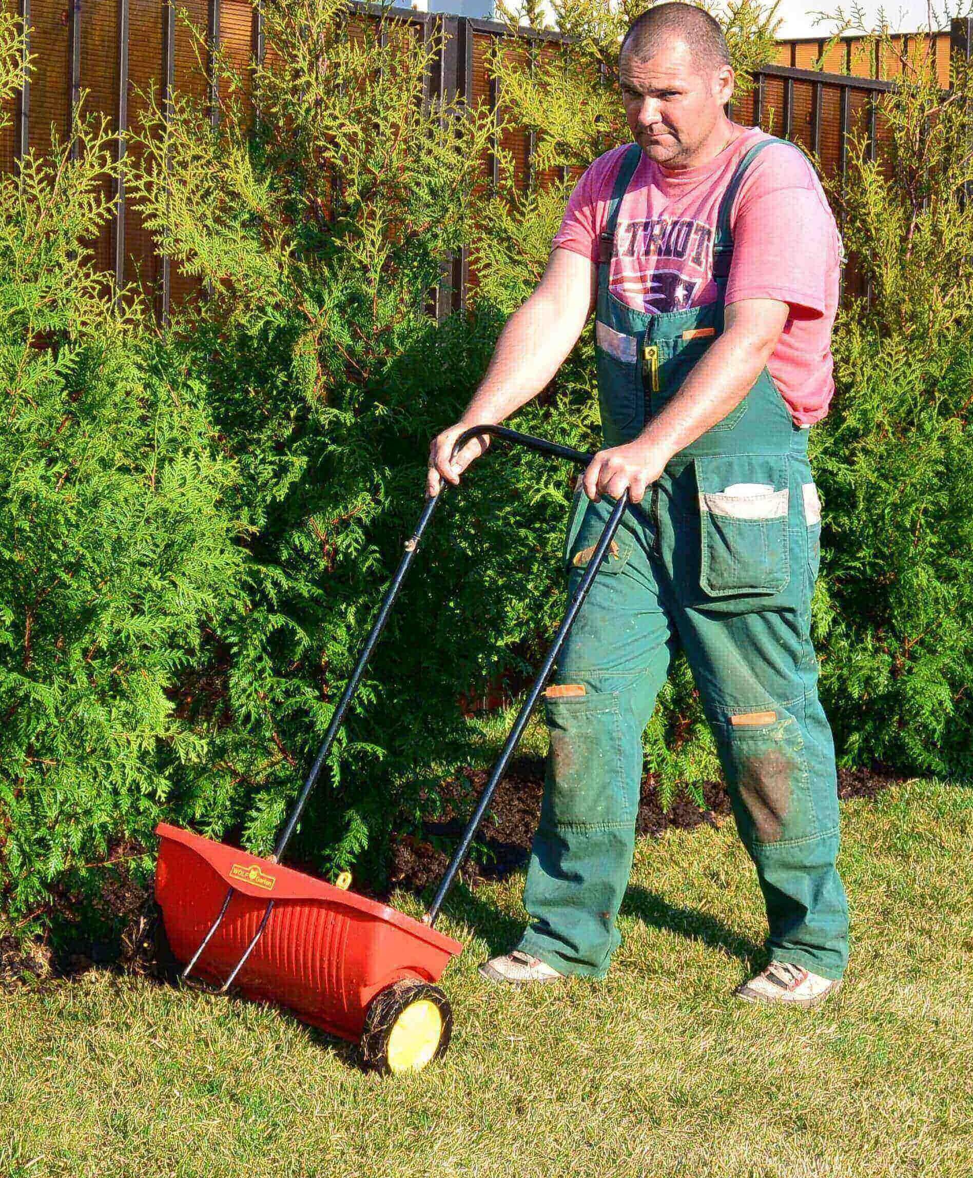 Правила ухода за рулонным газоном