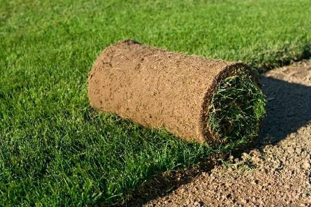 Сеялка для газона: от дешевой до дорогой