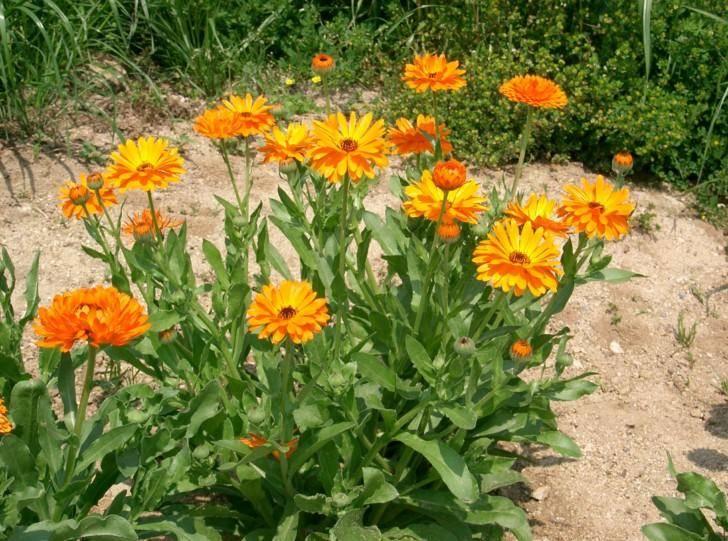 Рассада кохии: как и когда сажать семена, ухаживать в домашних условиях