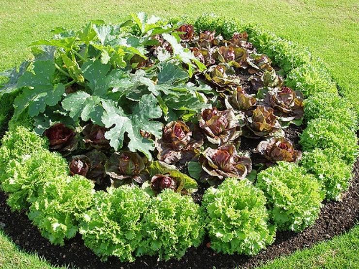 """Как избавиться от вредителей в саду и огороде без """"химии"""""""