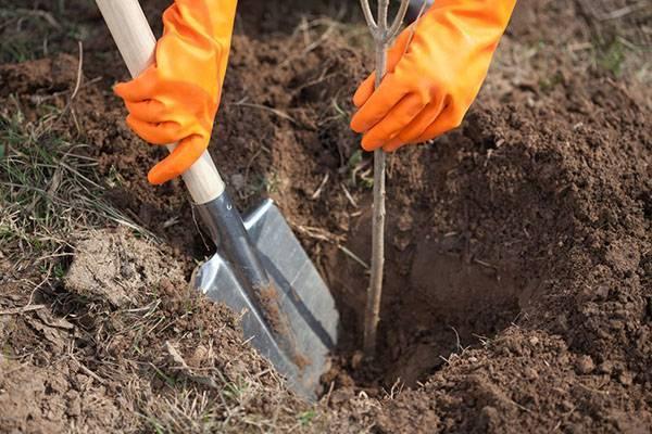 Календарь осенних работ в саду и огороде на октябрь: подробнейший план работ для дачников