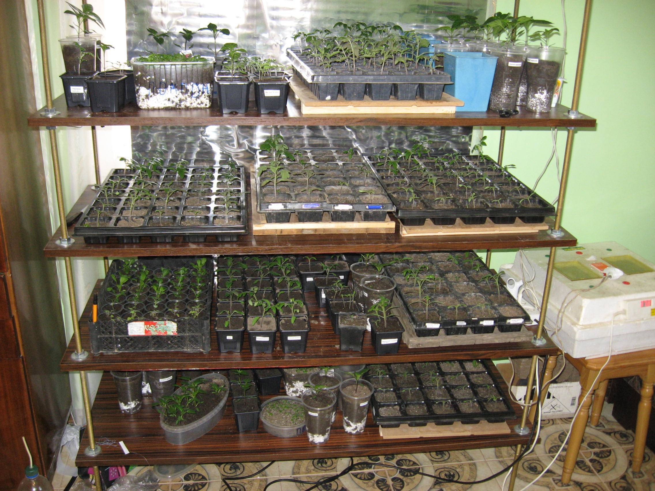 Зачем нужна фитолампа для растений?