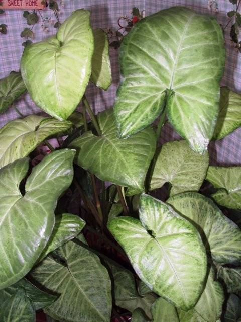 Самые неприхотливые комнатные растения с фото