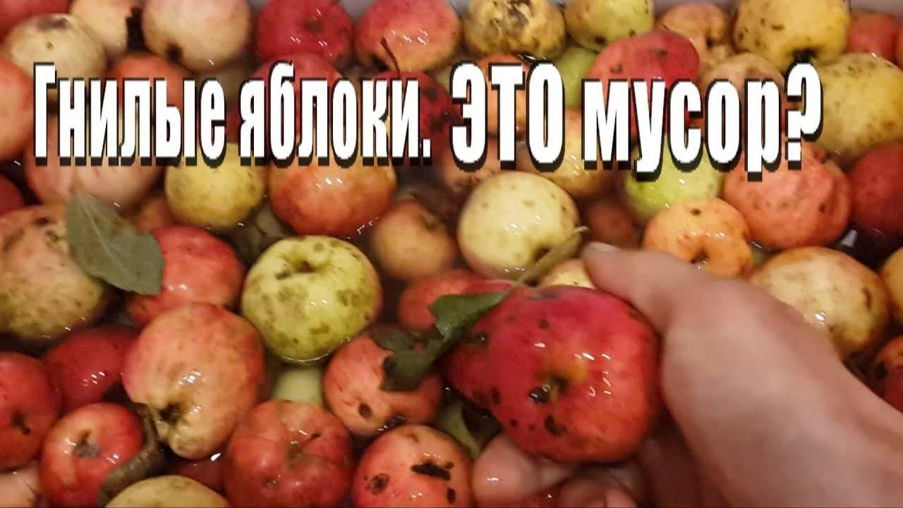 Как использовать гнилые яблоки как удобрение для огорода: способы, рецепты